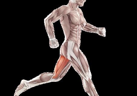 kisspng-back-pain-iliotibial-band-syndro