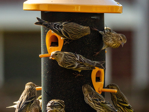 What is the best bird seed for my birds?