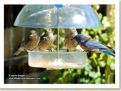 Top Ten Tips for Terrific Bird Feeding