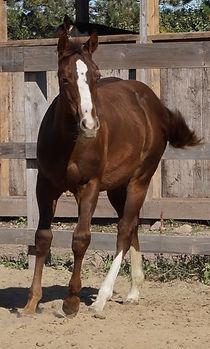 intermédiaire équitation 4