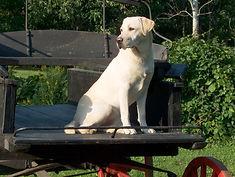 cours obéissance chien 3