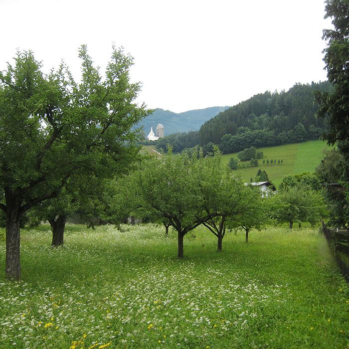Beratung Grundstückskauf und bauliche Möglichkeiten