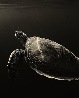 turtle-2584041_1920.jpg