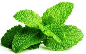 Peppermint Essential Oil (Peppermint Supreme)