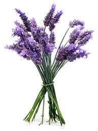 Lavender Essential Oil (Lavandula Officinalis)