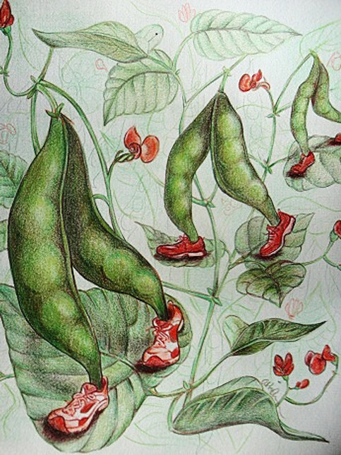 """8""""x10"""" Scarlet Runner Beans Print"""
