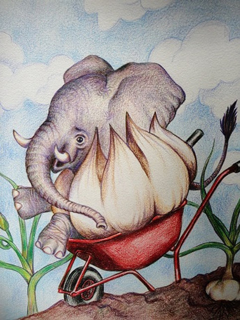 "8""x10"" Elephant Garlic Print"