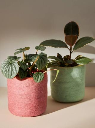Planter-all.webp