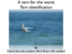 tern identification