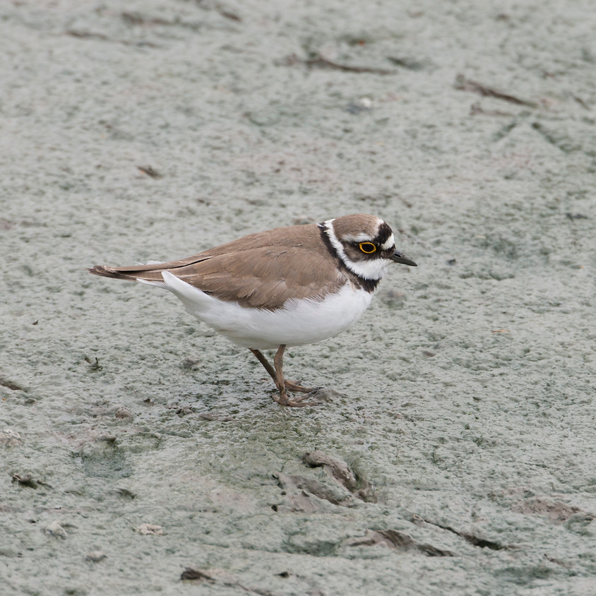 Lecture - Wading through wader - Maidstone RSPB
