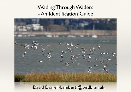 Wading Through Waders