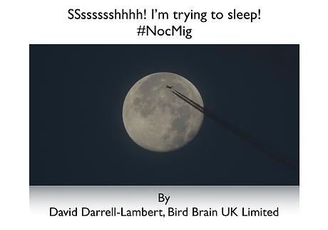 #nocmig nocturnal bird migration