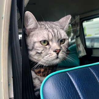 Back seat driver