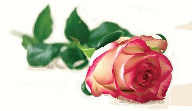 o-shot-Rose.png