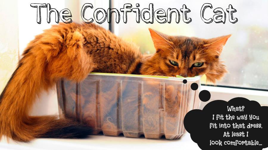 confident cat.jpg