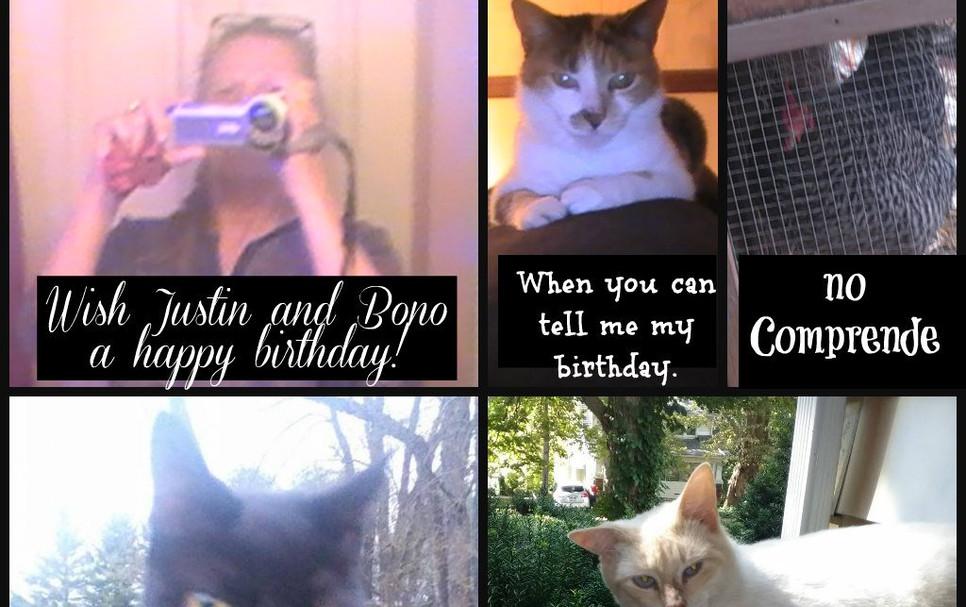 CATS, BIRTHDAYS.jpg
