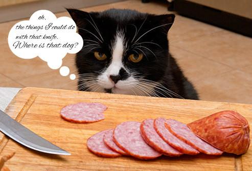thinkstock_rf_photo_of_cat_with_meat.jpg