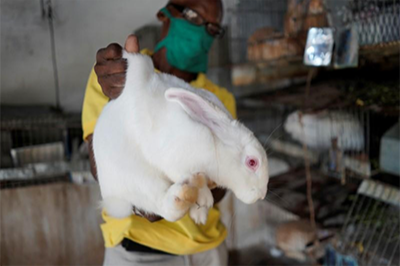 Reuters: My rabbit for your detergent? Cubans turn to barter as shortages worsen