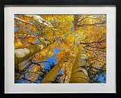 Auction Art.jpg