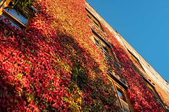 Biggerstaff Building with fall foilage