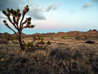 BLM rejects massive wind farm along California-Nevada border