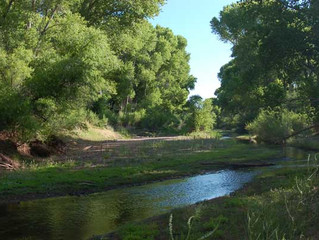 BLM SEEKS PUBLIC INPUT ON DRAFT RESOURCE MANAGEMENT PLAN FOR THE SAN PEDRO RIPARIAN NATIONAL CONSERV