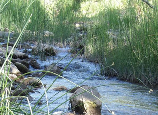 Environmental group taking Fort to court over water pumping reports