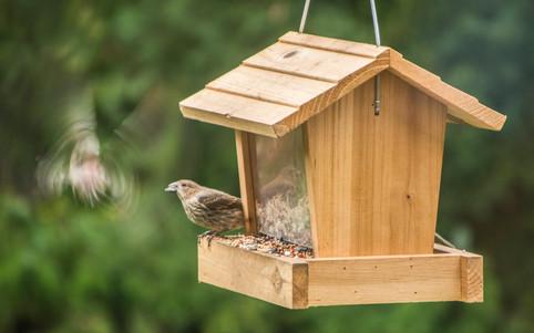 birdsandbeer_180825_0015.jpg