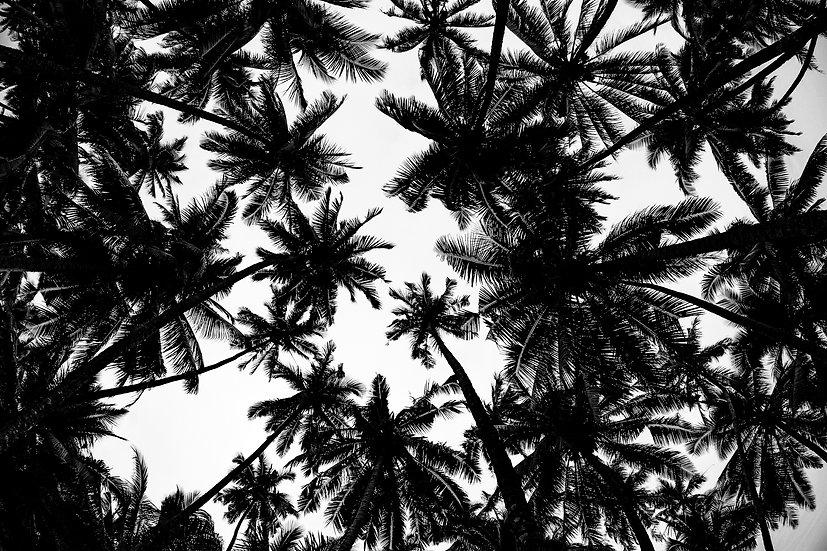 Sumatra Trees