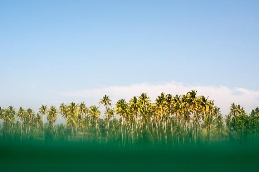 Coconuts Beach Sri Lanka