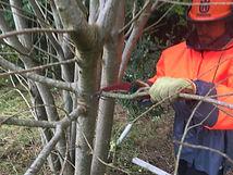 thornburywoodland management