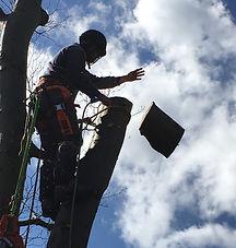 thornbury Tree work