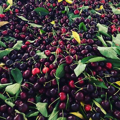 cherries in a bin.JPG