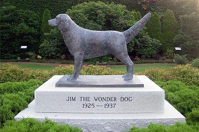 Jim-the-wonder-dog 2.jpg