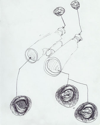Binocular Comp.
