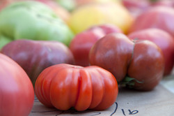 Tomatoes-Mkt