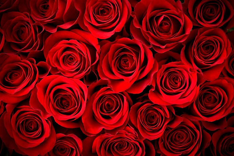 red-roses-183274994-5882289c3df78c2ccd7f