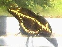 Butterfly%201%202017_edited.jpg