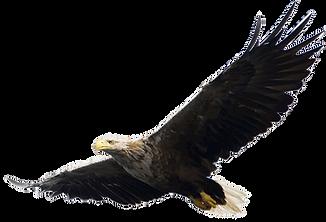 eagle 010.png