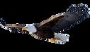 Eagle 004_edited.png