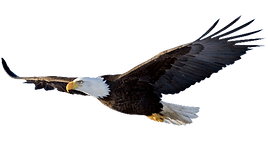 Eagle 004_edited.png