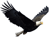 Eagle 006_edited.png