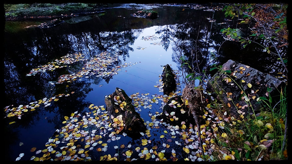 Autumns Osterøy Island Norway