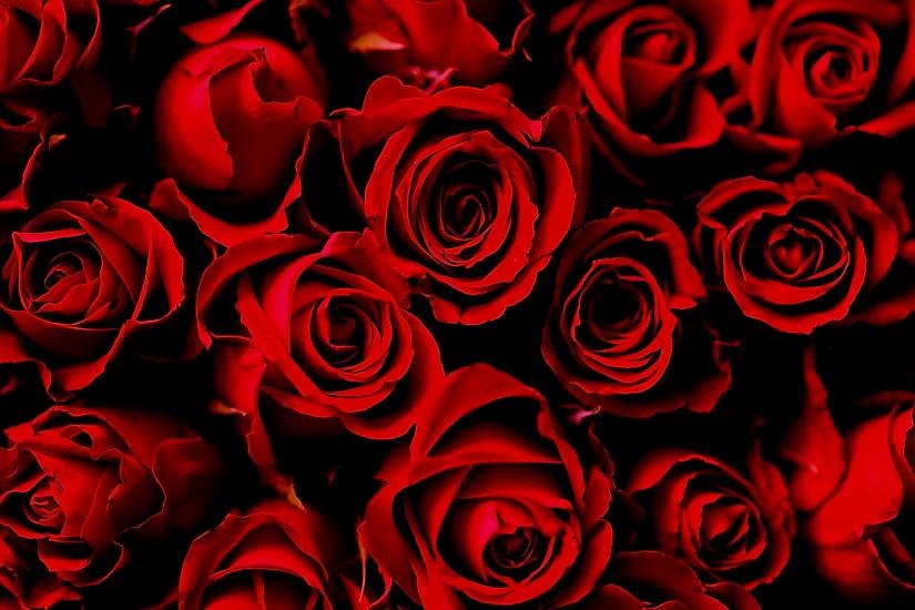 roses copy.png