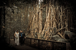 cairns wedding celebrant