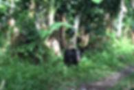 image14_edited.jpg