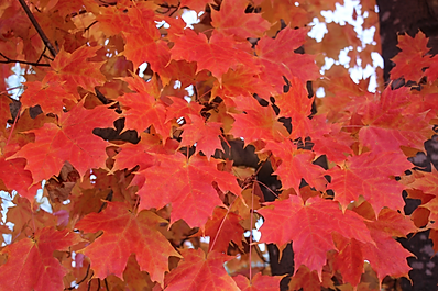 A cluster of leaves photo
