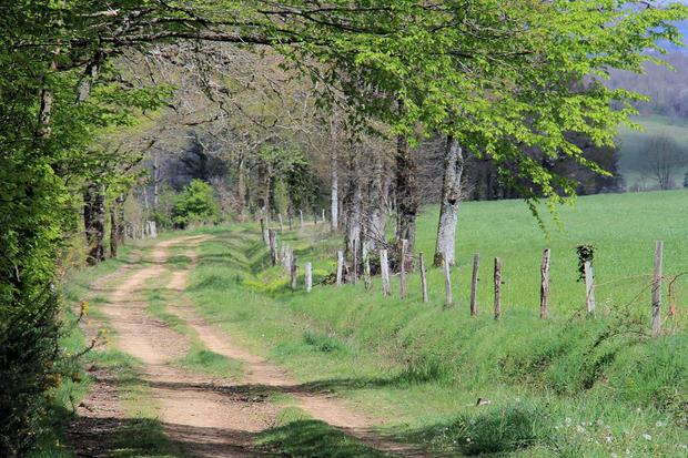 Local Chemins