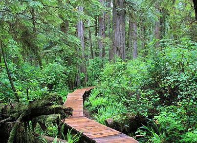 rainforest-2048447_1920 (1).jpg