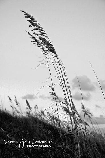 Sea oats B&W.jpg